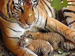 zoosafar, fasani, parco fasani, zoo naturale, zoo aperto, anmali zoo, visitare la puglia